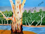 Darling River Red Gum