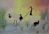 A pair of Red-crowned Cranes